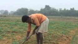 India Microfinance (KTK)