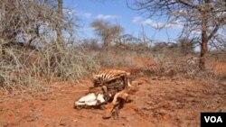drought_ethiopia