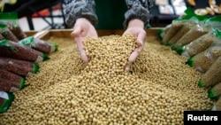 中国湖北省武汉市的工人们正在筛选大豆(2014年4月14日)