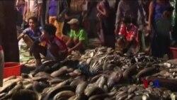 缅甸发展或令童工问题恶化