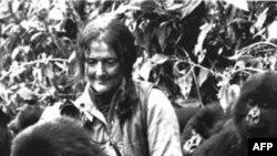 Bà Dian Fossey và các con khỉ gorrillas trong khu vực rừng núi Virunga ở Rwanda (ảnh chụp năm 1982)
