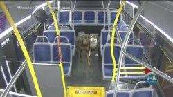 Водійка автобуса врятувала двох собак у штаті Вісконсин. Відео