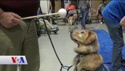Diyabetik Köpekler Hayat Kurtarıyor