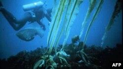 消失中的海藻林