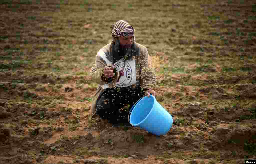 A Palestinian farmer throws wheat seeds during a tour by the International Committee of the Red Cross (ICRC), in the southern Gaza Strip.