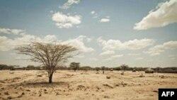 Hạn hán trong vùng Turkana của Kenya