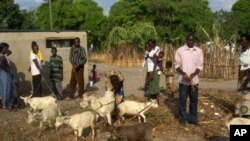 Zambian villagers show-off the goats they got from Concern Worldwide