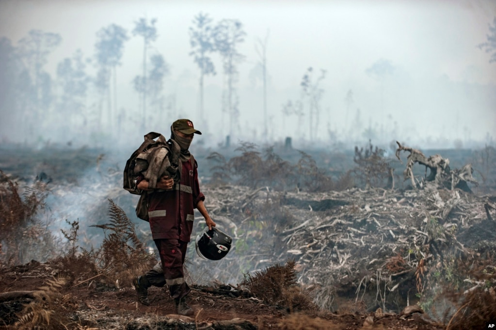 A firefighter walks on a field as smoke rises from burned trees at Sebangau National Park, Central Kalimantan, Indonesia. The smoke from the fires has covered parts of Indonesia, Singapore, Malaysia and southern Thailand in a thick haze.