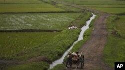 지난해 6월 북한 평양 외곽의 농촌 풍경. (자료사진)