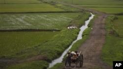 지난 2012년 평양 외곽의 농촌 풍경. (자료사진)