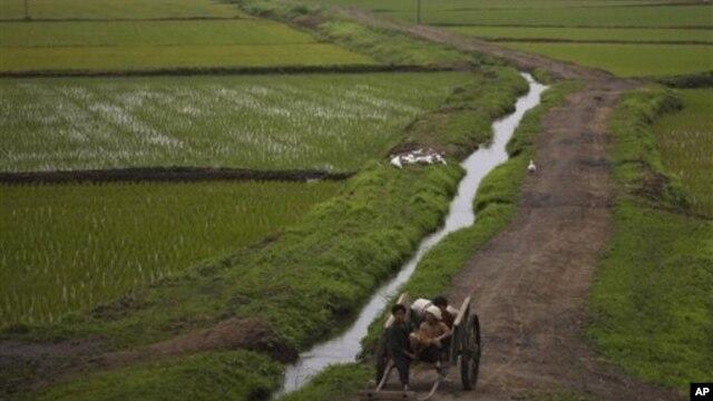 지난 2012년 6월 평양 외곽의 농촌. 유엔개발계획, UNDP는 북한 농촌 지역 개발 사업 등을 위해 2백만 달러를 지원하기로 했다고 밝혔다. (자료사진)