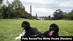 Бо та Санні, собаки родини президента Обами