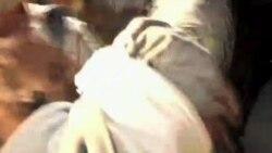 Коптская община Калифорнии возмущена антиисламским фильмом