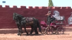 Des chevaux dressés pour le grand écran