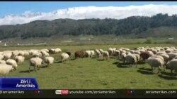 Koronavirusi nuk prek blegtorinë në jug të Shqipërisë