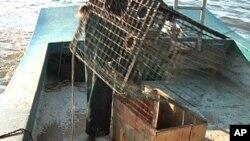 Излевањето на нафта во Мексиканскиот Залив – главоболка за рибарите