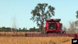 南達科他州的一個農戶在收割大豆。(資料圖片)