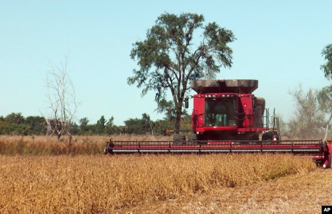 FILE - A farmer harvests a field of soybeans near Sioux Falls, South Dakota.