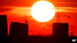 Seekor burung hinggap di tumpukan jerami di sebuah tanah pertanian pada hari yang panas di Frankfurt, Jerman, 25 Juli 2019 lalu. (foto: ilustrasi).