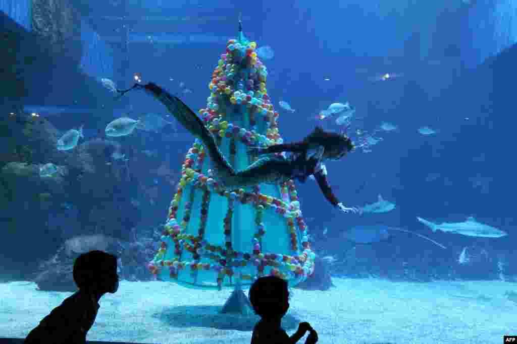 """Para pengunjung menyaksikan seorang penyelam berpakaian """"putri duyung"""" berenang melewati pohon Natal di Akuarium Jakarta pada musim liburan Natal dan Tahun Baru. (Foto: Dasril Roszandi / AFP)"""