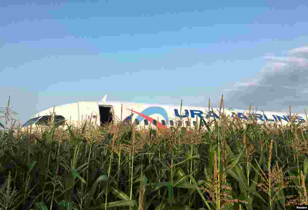 This image shows the Ural Airlines Airbus 321 passenger plane following an emergency landing in a field near Zhukovsky International Airport in Moscow Region, Russia.