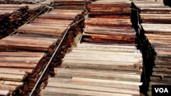 Sejumlah kayu merbau ilegal yang sudah berbentuk gergajian diamankan Gakkum KLHK sambil menunggu proses hukum berlangsung (foto VOA/Petrus).