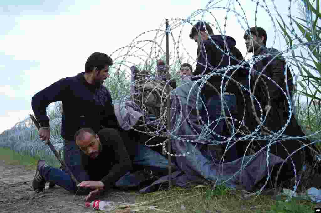 تلاش پناهجویان سوری برای عبور از سیم های خاردار تعبیه شده در مرز مشترک صربستان و مجارستان. بر اساس گزارش ها تاکنون بیش از ۱۴۰ هزار پناهجو از طریق کشورهای حوزه بالکان خود را به مجارستان رسانده اند.
