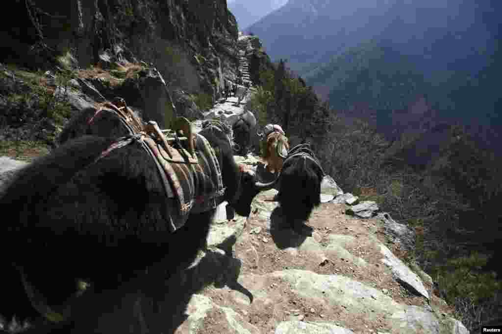 مقامی لوگ اس مشکل مال برداری اور کوہ پیماؤں کی رہنمائی کرتے رہتے ہیں۔
