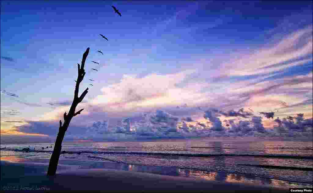 Burung-burung Pelikan terbang sepanjang pantai saat matahari terbit di Taman Nasional Pulau Hunting di kota Beaufort, South Carolina, Amerika Serikat.