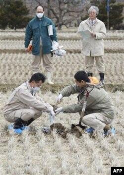 Yaponiya: Tinch okeanida radiatsiya kuchli