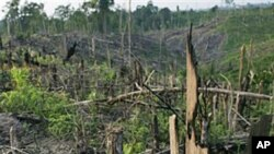 Trees smolder after a clearing fire near Bukit tiga puluh natural forest in Riau, Central Sumatra, Indonesia (file photo)