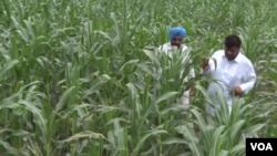 Tại 27 làng trên khắp bang nông nghiệp Haryana, nhiều nông gia đang áp dụng kỹ thuật khí hậu thông minh theo phát minh của hiệp hội Khí hậu thay đổi, Nông nghiệp và An toàn lương thực.