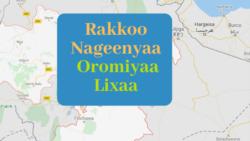 Jaarsoliin Biyyaa fi Hayyoonni Siyaasaa Ajjeechaan Lammiilee Nagaa Irratti Raaw'atamu Dhaabachuu Qaba, Jedhan