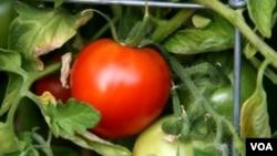 Rooting DC distribuye cerca de 16 toneladas de semillas a proyectos de jardinería cívicos.