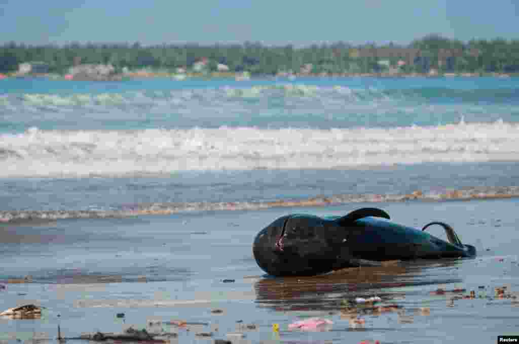 A whale lies dead on a beach in Banten, near Jakarta, Indonesia, in this photo taken by Antara Foto.