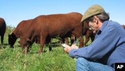 Menurut Tim DelCurto, pakar sapi pada Universitas Negeri Oregon, ada banyak pilihan untuk mendapat pakan ternak murah, mencakup rumput, jerami, biji-bijian sisa penyulingan produksi bahan bakar ethanol, limbah pengalengan dan sayuran yang tidak terpakai,