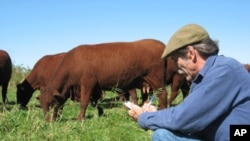 Massachusetts beef farmer Ridge Shinn uses holistic herding to reduce his carbon footprint.