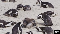 Глобальне потепління може призвести до значного зменшення розміру ссавців