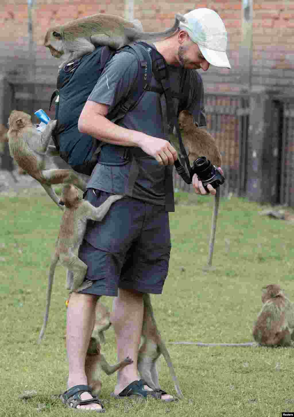 Macacos trepam a turista no templo de Phra Prang Sam Yot temple a norte de Bangkok, na Tailândia.