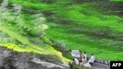 Sông Chicago được nhuộm màu xanh lá cây trước cuộc diễu hành mừng lễ St. Patrick