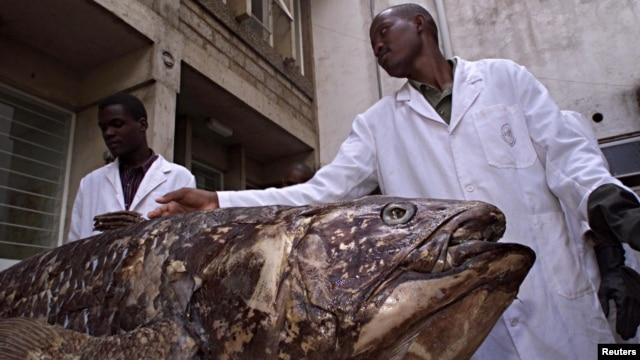 National Museum of Kenya researchers with Coelacanth caught by fishermen in Malindi, November 2001.