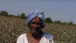 A smallholder farmer in his Bt cotton field in southern India. A new study shows Bt technology contributes to higher crop yields and profits. (Matin Qaim)