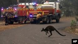 Avustralya'da doğal hayat devam eden 100'ün üzerinde yangın nedeniyle ağır tahribat altında.