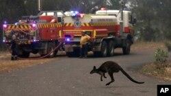 El estado más poblado de Australia declaró el jueves su segundo estado emergencia en meses, mientras que el calor extremo y los fuertes vientos avivaron más de 100 incendios forestales, incluyendo tres grandes incendios en las puertas de Sídney. Foto AP.