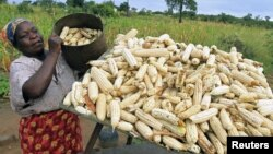 FILE - A subsistence farmer stacks her crop of maize in Chivi, southeast of the capital Harare, Zimbabwe, April 1, 2012.