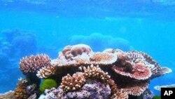 นักวิทยาศาสตร์พบระบบนิเวศใหม่ของจุลินทรีย์ใต้พื้นมหาสมุทร