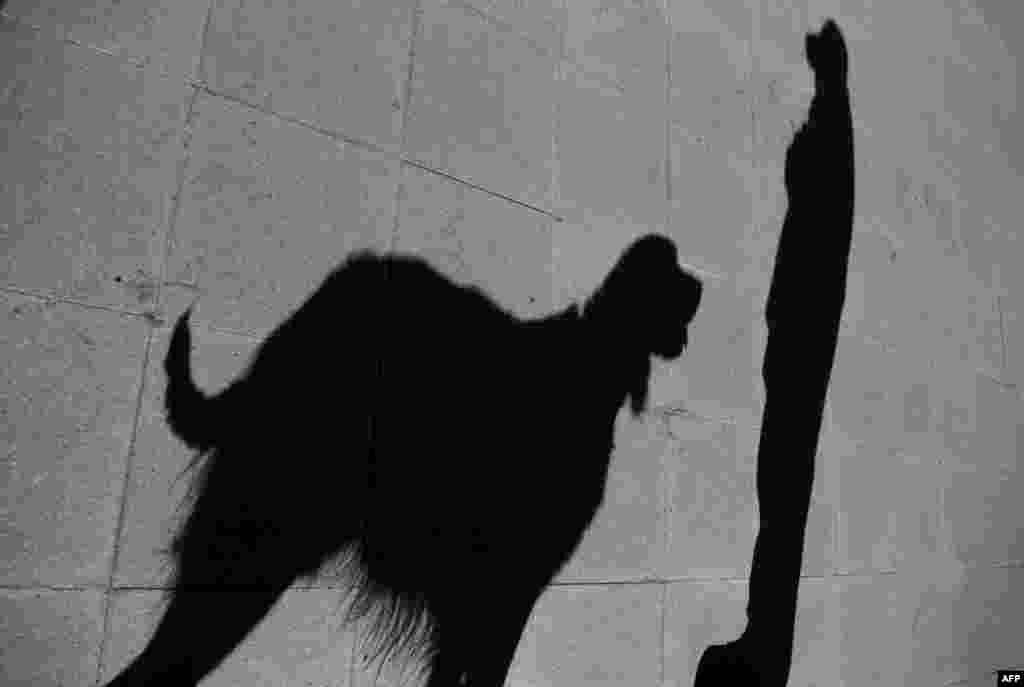 چلی کی پولیس کے مطابق تربیت کے بعد کتے انسان کو سونگھ کر یہ بتائیں گے کہ وہ شخص کرونا سے متاثر ہے یا نہیں۔