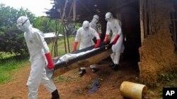 Petugas kesehatan mengangkut seorang pria yang sedang sekarat akibat ebola di Monrovia, Liberia (8/11). Korban tewas ebola telah melampaui 5.000 jiwa menurut WHO.