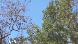 В Техасе борются за спасение лесов