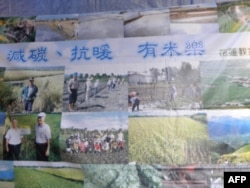 慈心在各地推广有机农作